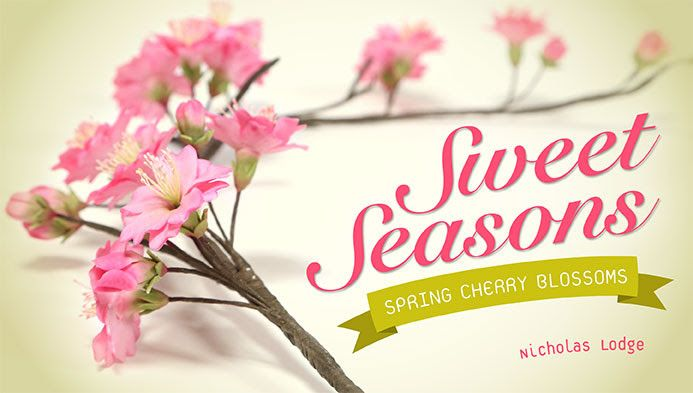 Sweet Seasons - Spring Cherry Blossoms